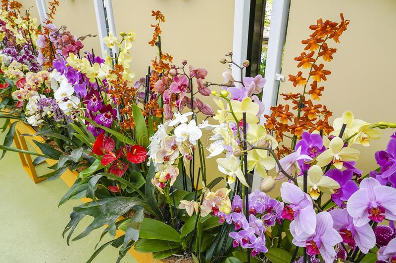 A colorful combination of orchids mainly Phalaenopsis.  stock photos