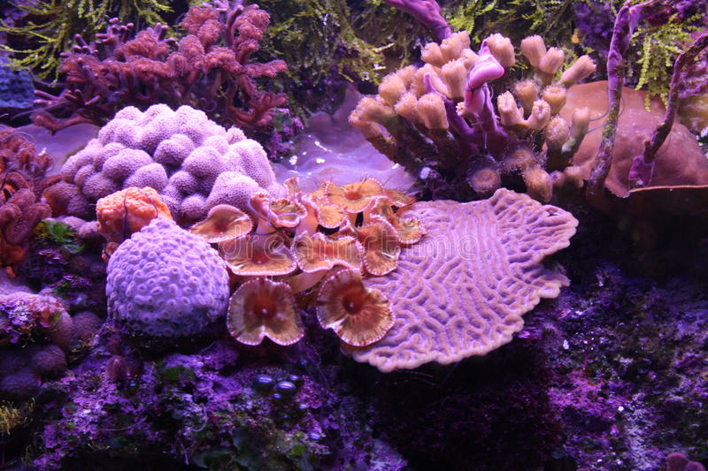 Colorful coral reef. Underwater view of colorful, tropical coral reef stock photo