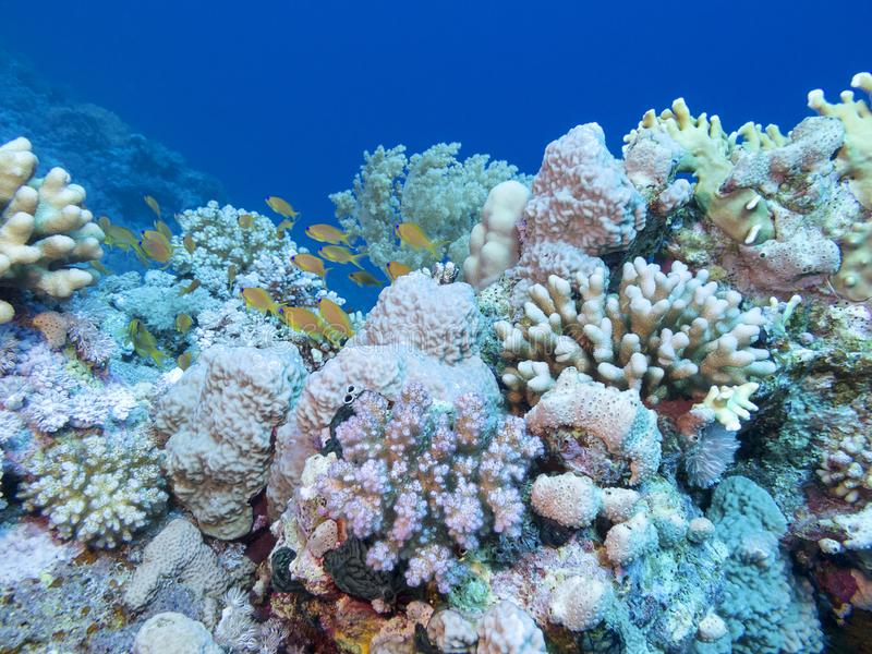 Colorful coral reef at the bottom of tropical sea, underwater landscape. royalty free stock photos