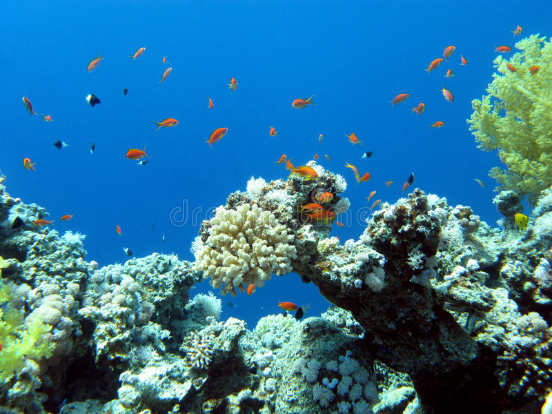 Colorful coral reef in tropical sea, underwater stock image