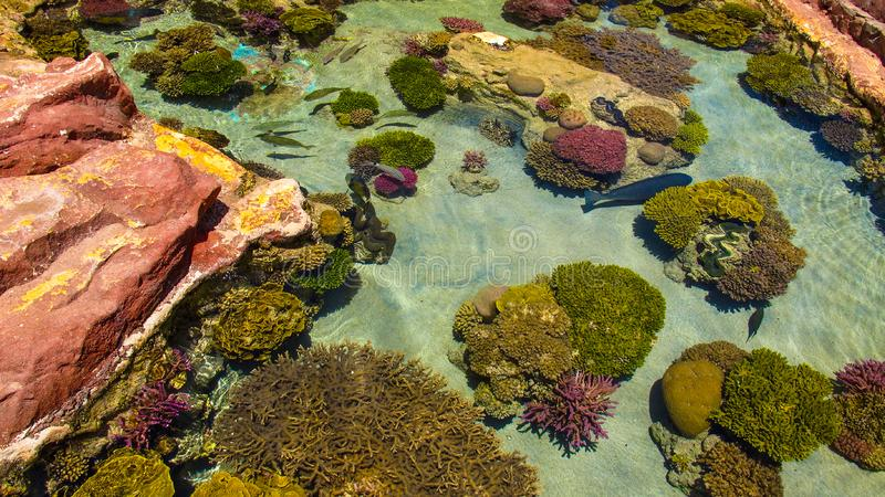 Colorful coral reefs and the beauty of the underwater world. Eilat, Israel.  stock photo
