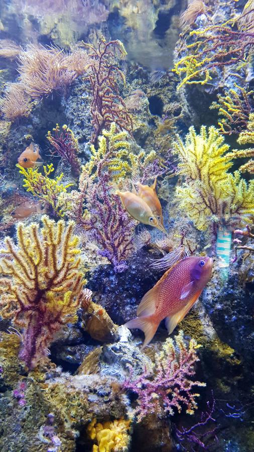 Colorful corals and fishes. In Barcelona aquarium stock photos