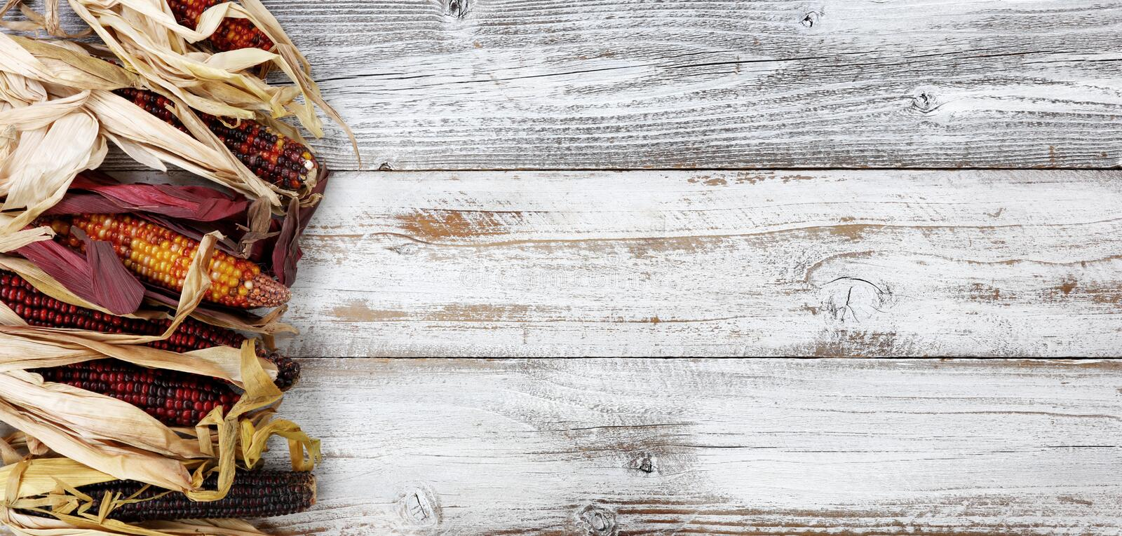 Colorful corn on left border of white rustic wood for the Autumn holiday. Colorful corn on left border of white rustic wood for the Thanksgiving Autumn holiday stock photos