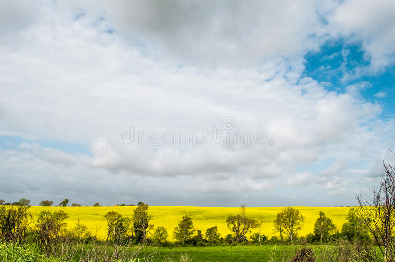 Colorful countryside cloud sky landscape, yellow field.  stock images