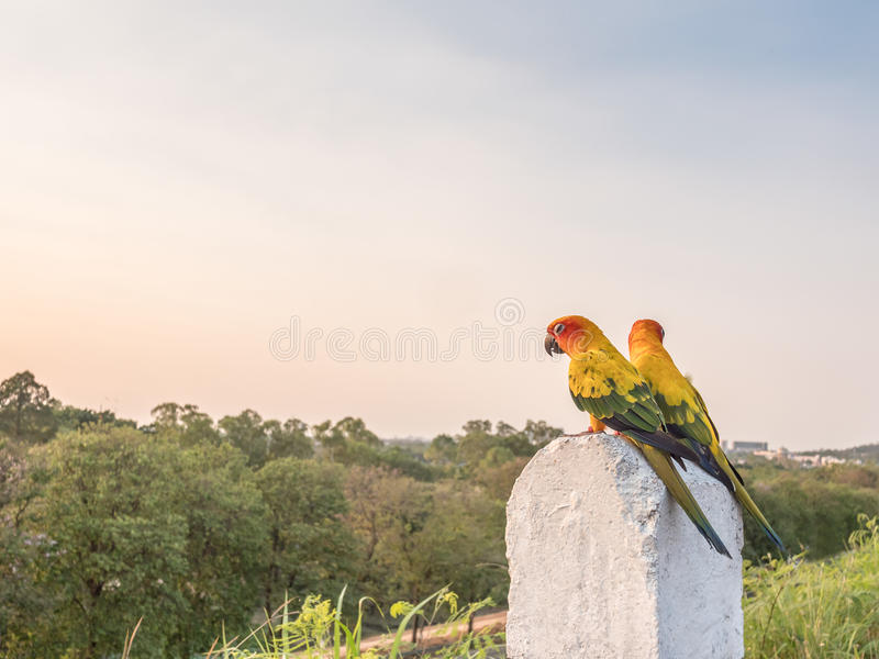 Colorful couple macaws sitting on a kilometer stone. On the road, selective focus royalty free stock images