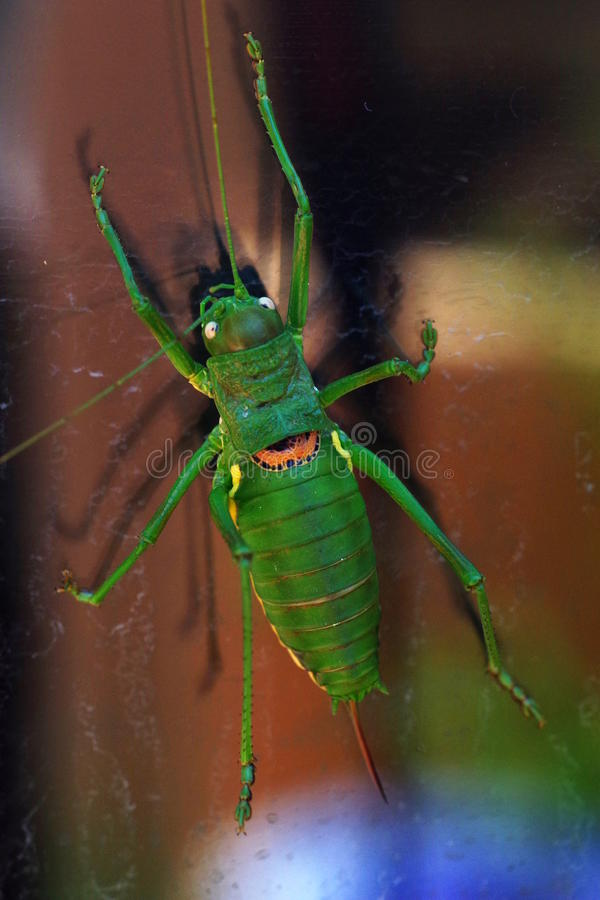 Colorful cricket stock photo