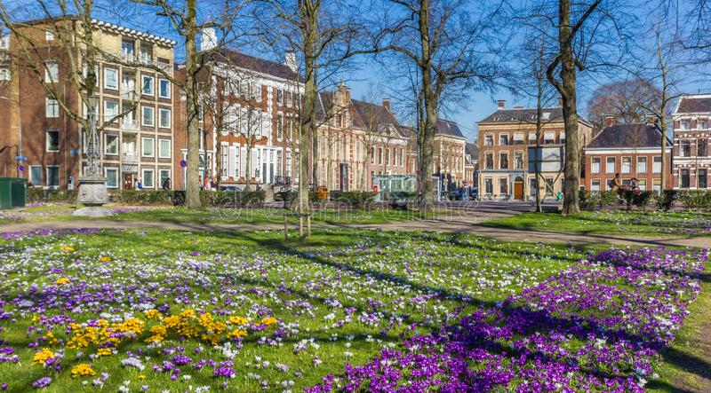 Colorful crocuses in a park in Groningen stock photo