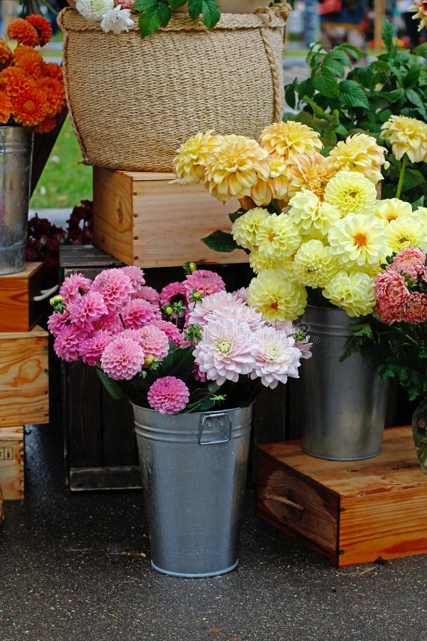 Colorful dahlias in metal vases. At market stock images