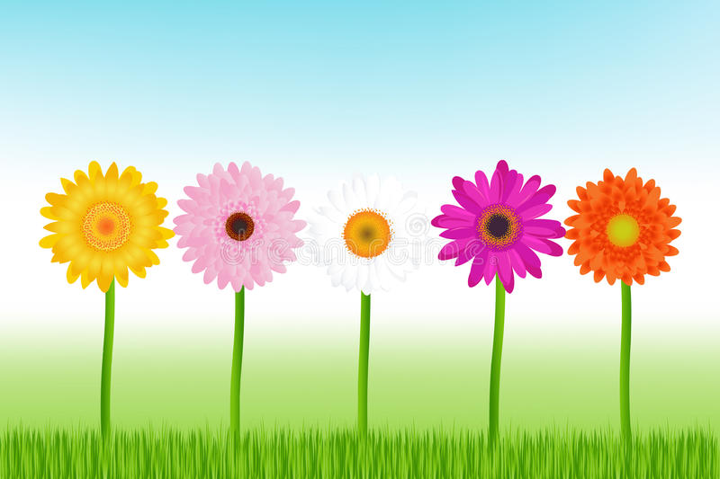 Colorful Daisies. Vector stock illustration