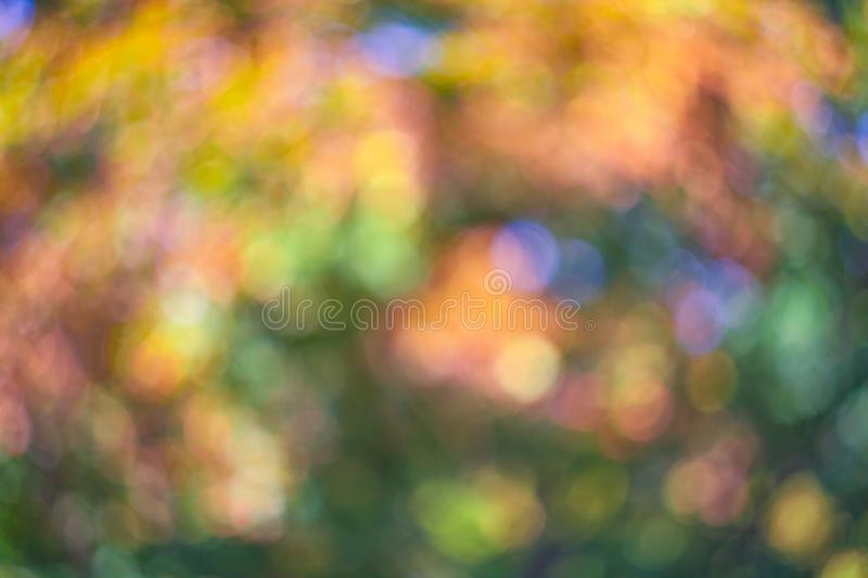 Colorful defocused background of nature leaves pattern. Image of Colorful defocused background of nature royalty free stock images