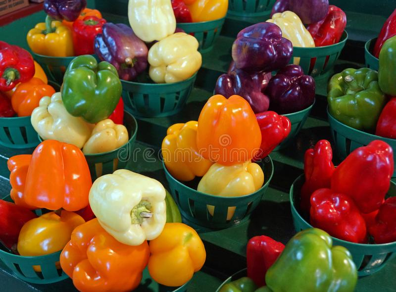 Colorful display of fresh picked bell peppers royalty free stock photography