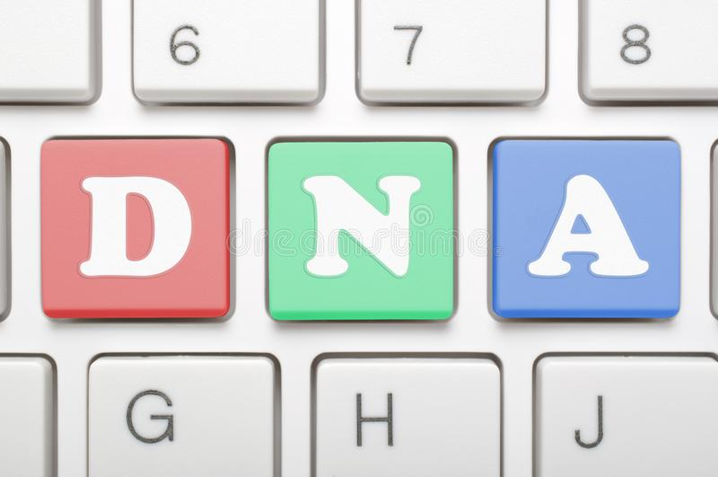 Colorful DNA key on keyboard royalty free stock photography