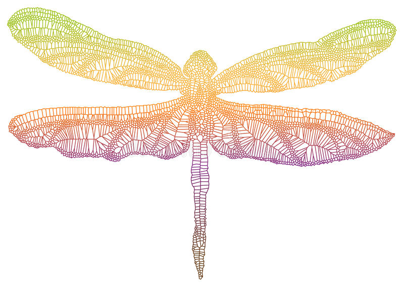 Download Colorful dragonfly stock vector. Illustration of filigree - 13955743