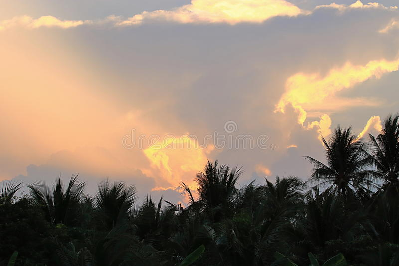 Colorful dramatic sky on twilight time against coconut palm trees on foreground. stock images