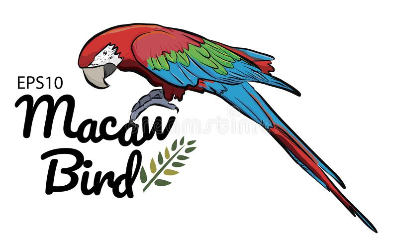 Colorful drawing Macaw bird pattern background royalty free illustration