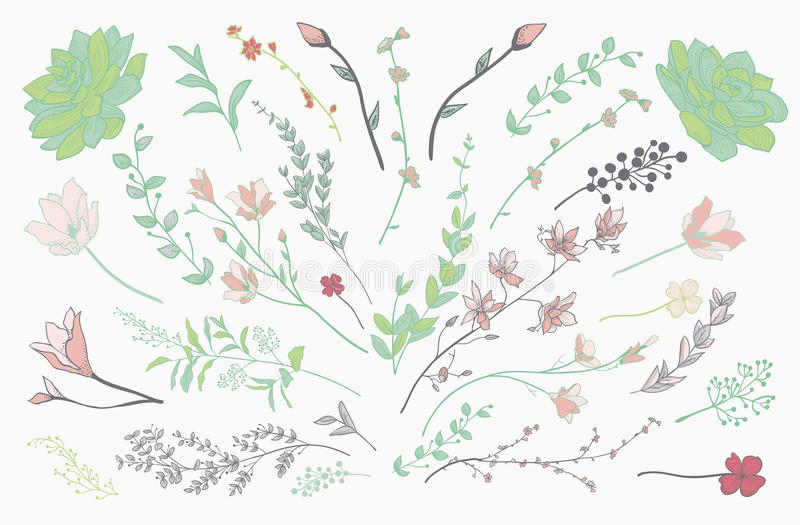 Colorful Drawn Herbs, Plants and Flowers. Vector Illustration royalty free illustration