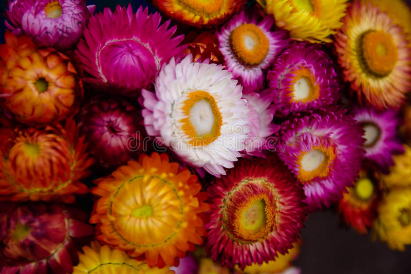 Colorful dried flower stock images