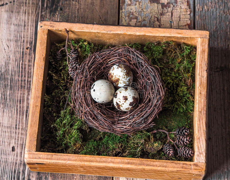 Colorful Easter Decor quail eggs in nest, moss and bird feather in wooden box royalty free stock photos