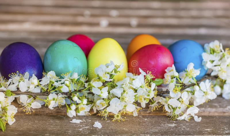 Easter Eggs and Cherry Blossoms. Colorful Easter eggs with cherry blossoms on a wooden background .Easter decoration stock photos