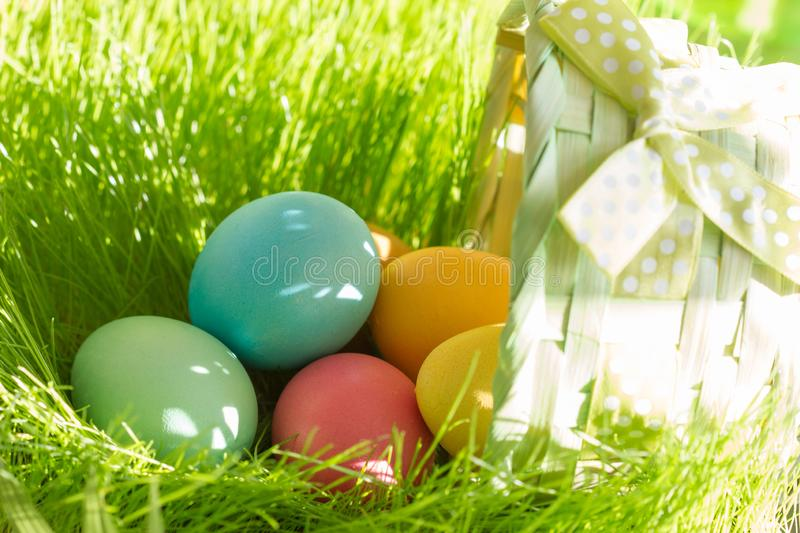 Colorful easter eggs on the meadow in the grass and basket. Closeup royalty free stock images