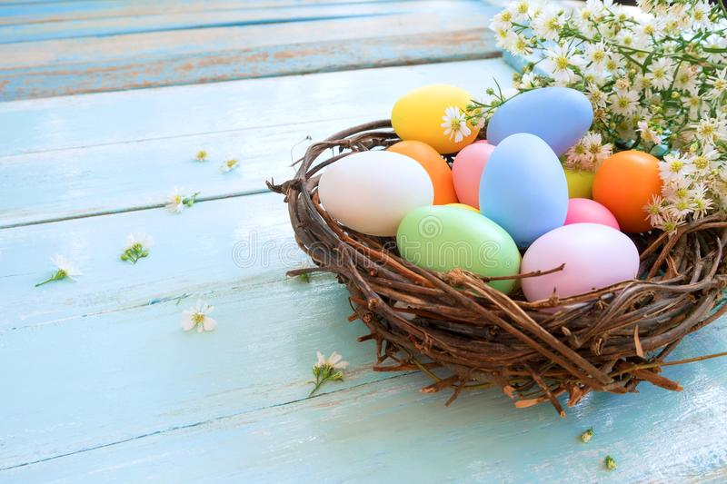 Colorful Easter eggs in nest with flowers on blue wooden background. stock photos