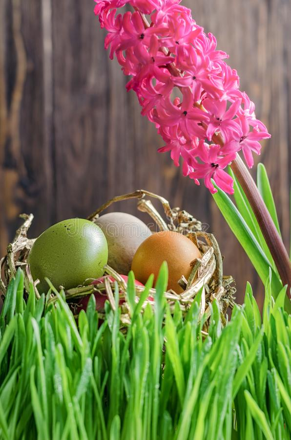 Colorful easter eggs in the nest in grass in front of wooden fen stock photos