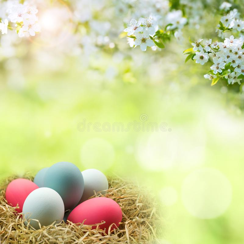 Colorful easter eggs with spring blossoms. And bokeh in sunny landscape stock photo