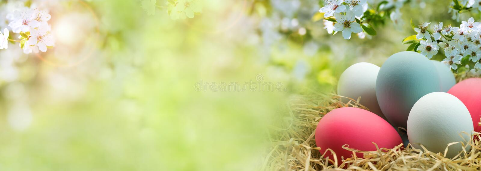 Colorful easter eggs in spring. Colorful easter eggs in a sunny spring landscape for a background royalty free stock photos
