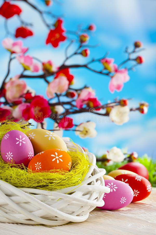 Colorful Easter eggs, white nest and branches with spring flowers on wooden table and sky background royalty free stock images