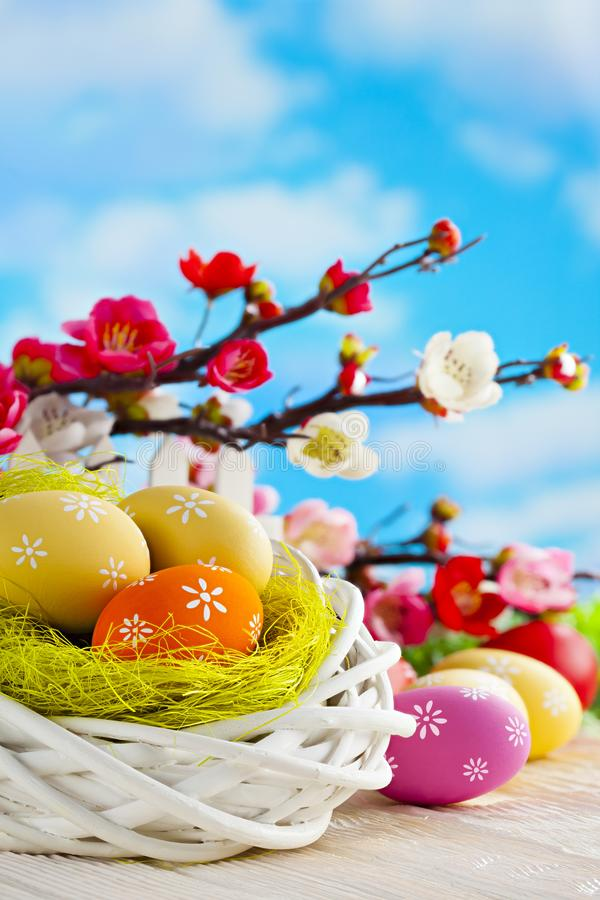 Colorful Easter eggs, white nest and branches with spring flowers on wooden table and blue sky background stock photos