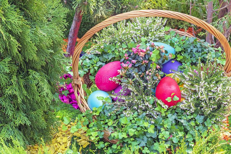 Colorful Easter eggs in a wicker basket on a natural background royalty free stock images