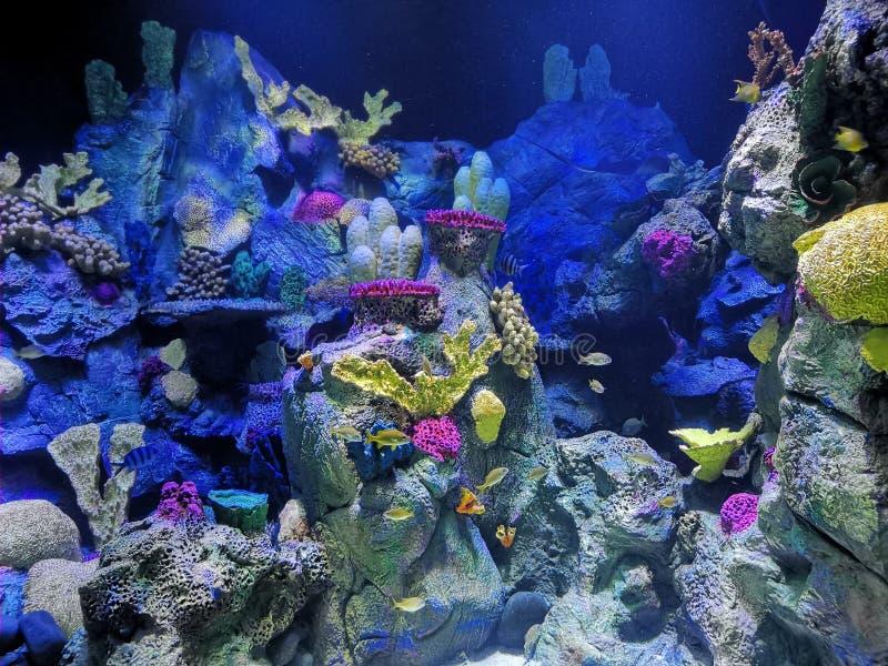 Colorful and exotic aquarium stock images