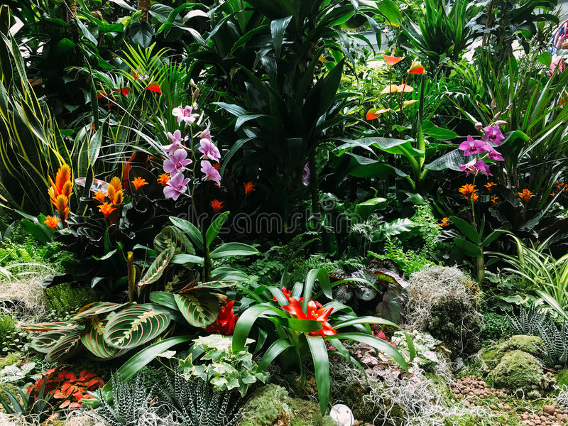 Colorful Exotic Flowers In Garden royalty free stock photos