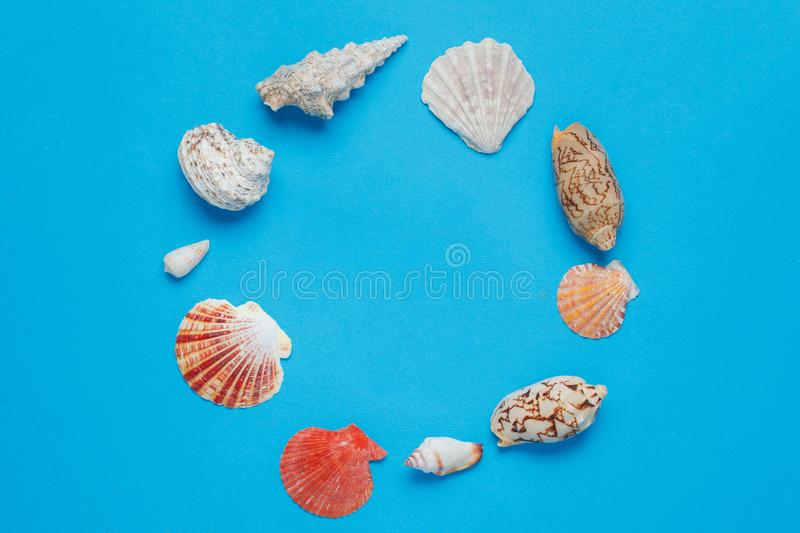 Colorful Exotic Ocean Conch Collection Flat Lay. Beautiful Tropical Seashell Composition Blue Background. Natural Marine Clam Circle Frame Arrangement Summer stock photography
