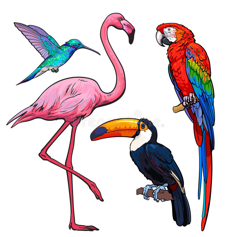 Colorful exotic tropical birds - flamingo, macaw, hummingbird and toucan royalty free illustration