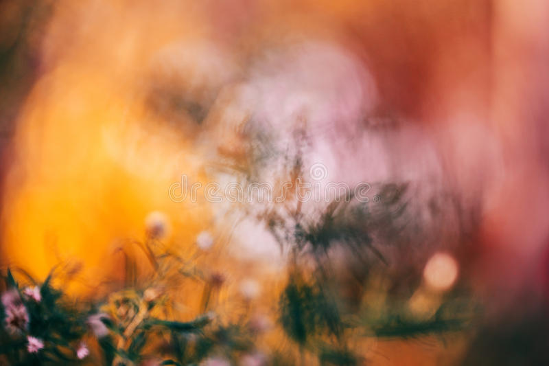 Colorful fairy dreamy magic yellow red flower blurry background. Beautiful colorful fairy dreamy magic yellow red flower blurry background, toned with instagram stock photography