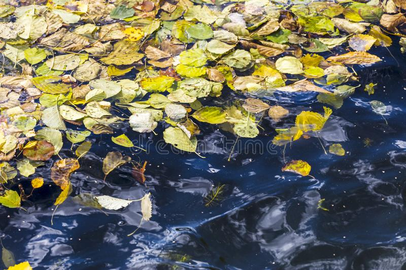 Colorful fall dry leaves on blue water surface stock images