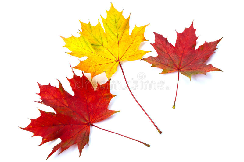 Download Colorful Fall Leaves Stock Photography - Image: 21475632