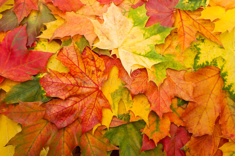 Colorful fall leaves stock photography