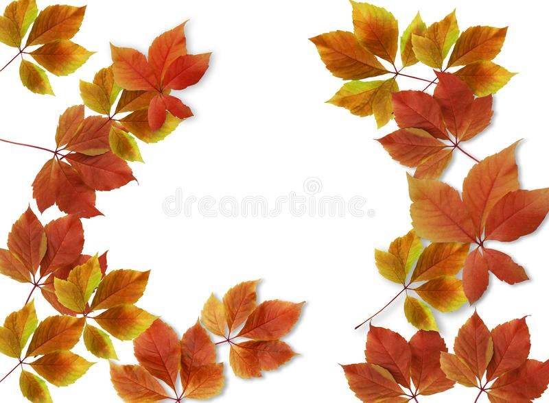 Colorful fall leaves isolated on white background with copy space. Colorful red and yellow fall leaves isolated on white background with copy space vector illustration