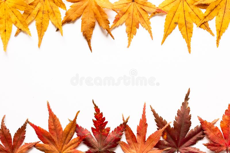 Colorful Fall Maple Leaves Frame in White Background royalty free stock image
