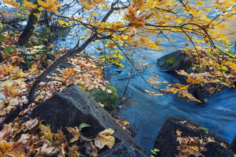 Colorful fall scene with yellow autumn leaves and blue water stock photos