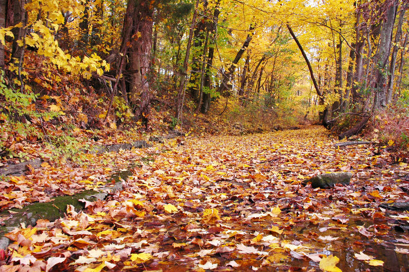 Download Colorful Fall Trees Leaves And Creek Bed Stock Photo - Image: 10248380