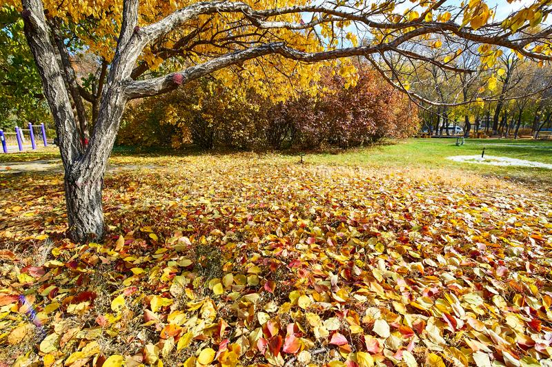 The colorful fallen leaves in the park. The photo was taken in Tieren park Daqing city Heilongjiang province, China royalty free stock photos