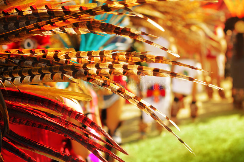 Colorful feathers royalty free stock photography