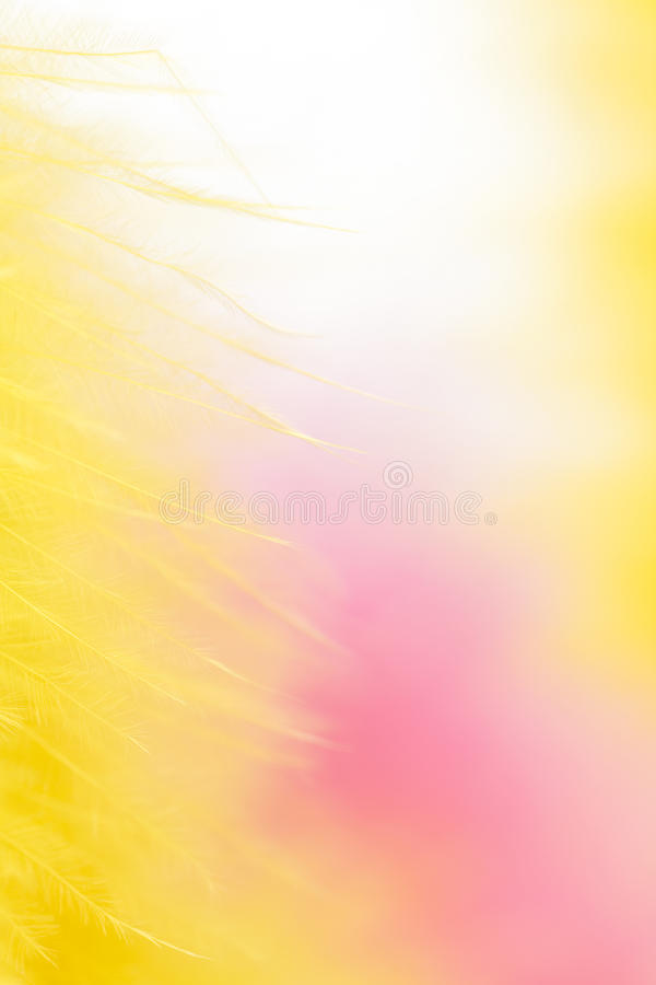 Free Colorful Feathers Background Stock Images - 13581474