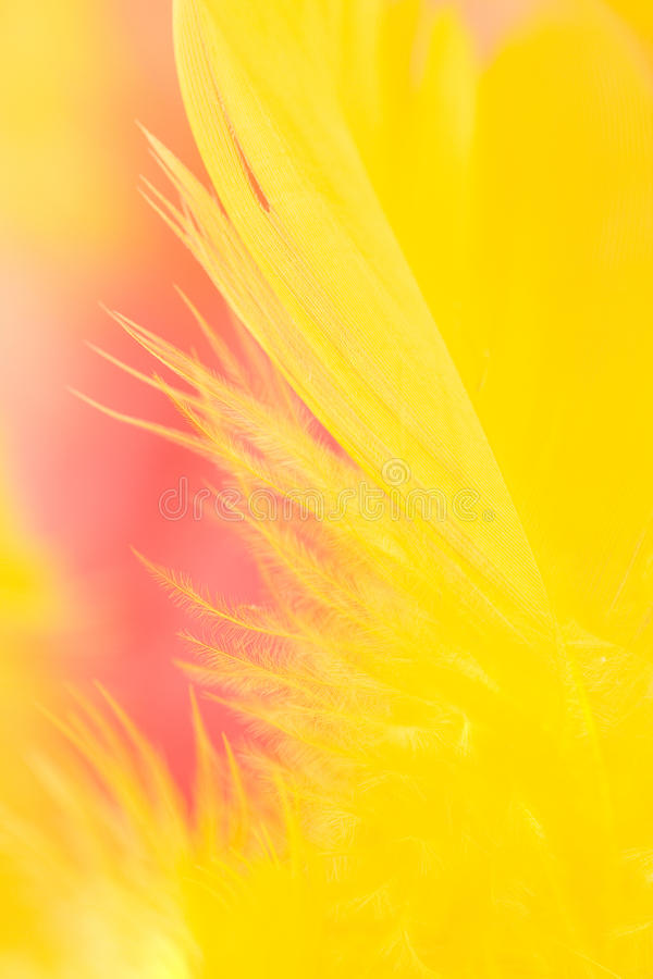 Free Colorful Feathers Background Royalty Free Stock Photo - 13581475