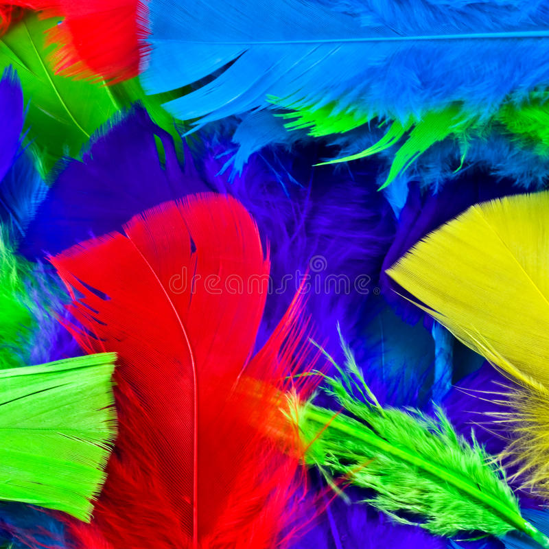 Colorful Feathers Stock Photos