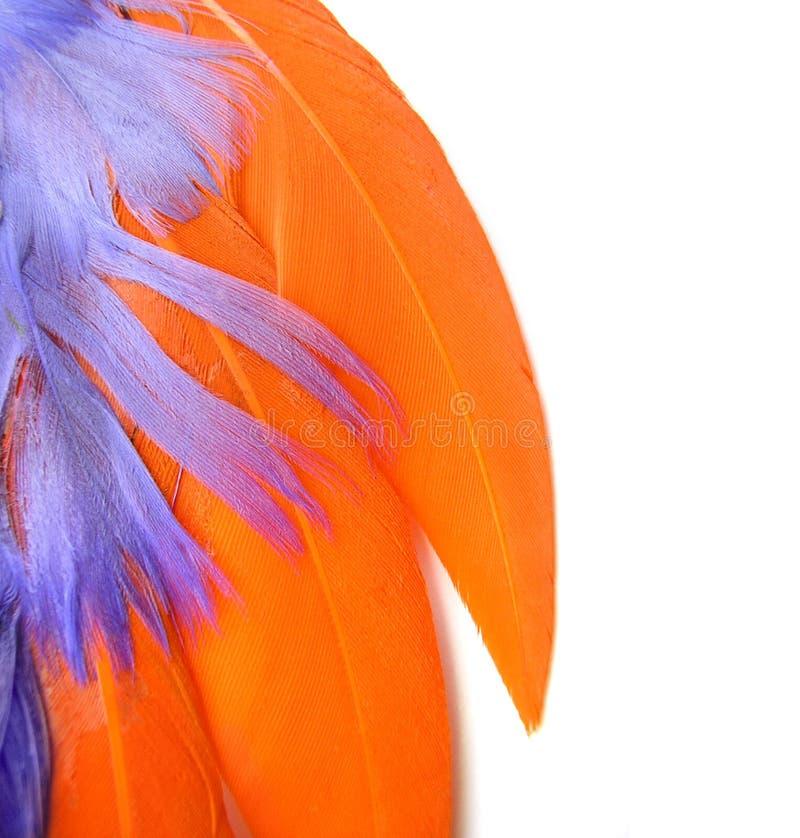 Colorful feathers closeup - orange, purple royalty free stock photos