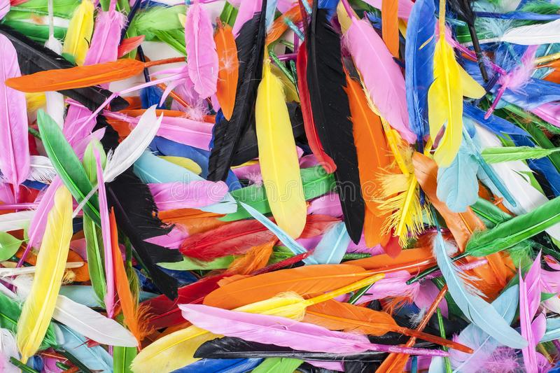 Colorful feathers. Parrot colors duck feather texture. stock photos